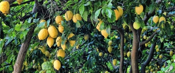 5 Fruit Trees for Your Home Garden